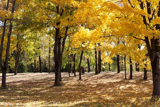 Drzewa liściaste, oświetlone słońcem