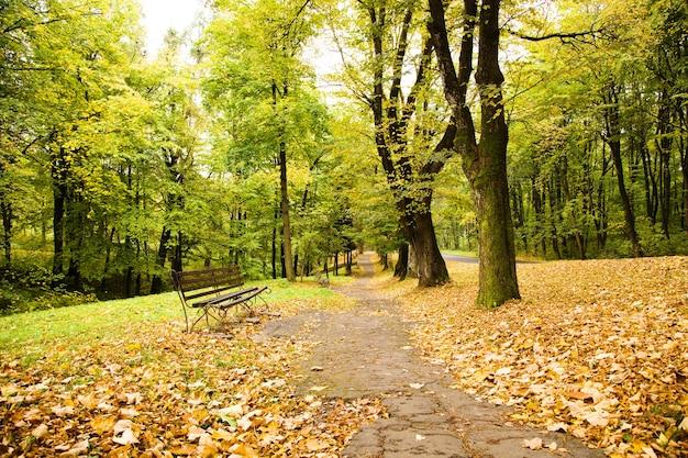 Drzewa liściaste rosnące jesienią w roku