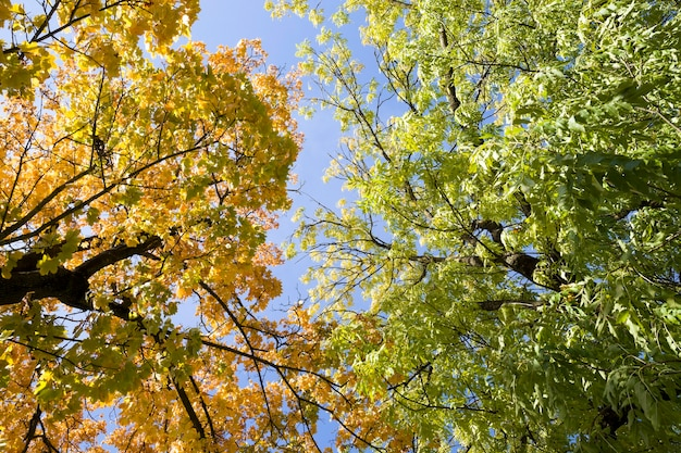 Drzewa liściaste rosnące razem w okresie jesiennym