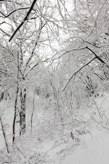 Drzewa liściaste zimą