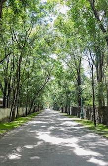 Drzewa między drogą