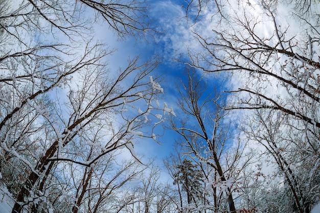 Drzewa miękkiej ostrości lasowych drewna krajobrazu tła tapety nieba zielone szerokie chmury