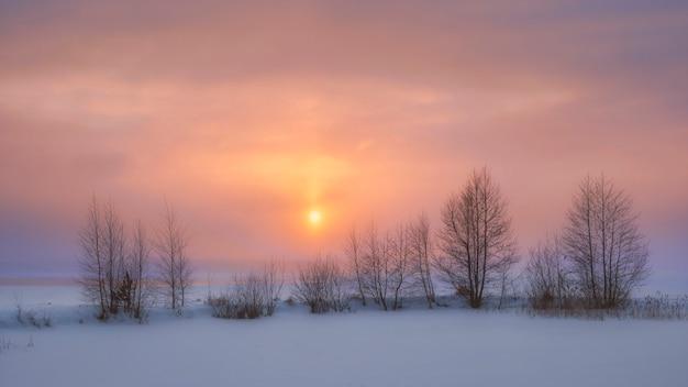Drzewa na brzegu jeziora vuoksa, zimowy zachód słońca w regionie leningradu