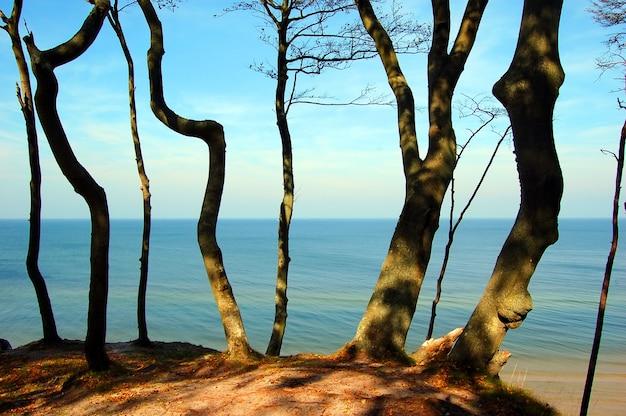 Drzewa na plaży