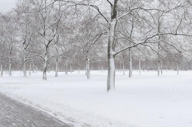 Drzewa na śniegu w parku zimą.