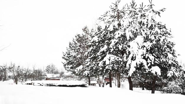 Drzewa na śniegu. wieś i przyroda zimą. dużo śniegu po opadach śniegu