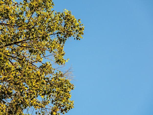 Drzewa na tle jasnego błękitnego nieba, spoglądające z dołu.
