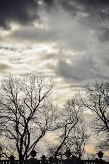 Drzewa na tle jasnego nieba, drzewa na tle zachodu słońca, zachód słońca