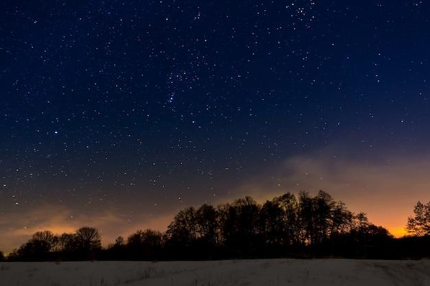 Drzewa na tle nocnego gwiaździstego nieba