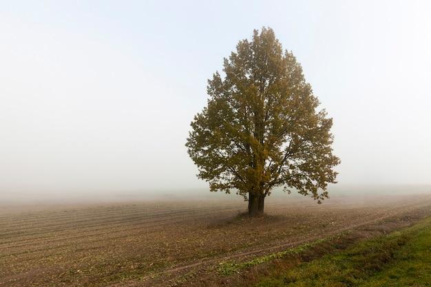 Drzewa na wykresie z bliska w sezonie jesiennym. ulicę widać gęstą mgłę i słabą widoczność.