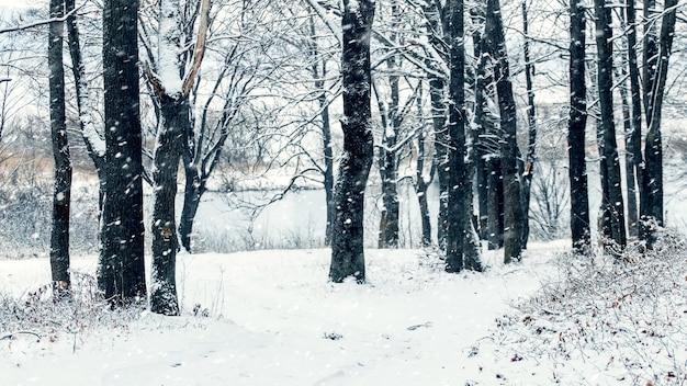 Drzewa nad brzegiem rzeki zimą podczas opadów śniegu