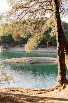 Drzewa nad jeziorem w świetle dziennym