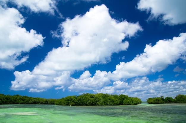 Drzewa Namorzynowe Na Morzu Karaibskim Premium Zdjęcia