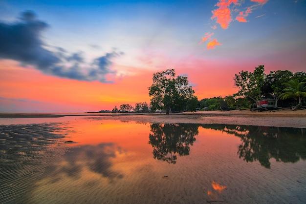 Drzewa namorzynowe o zachodzie słońca na wyspie melayu beach batam