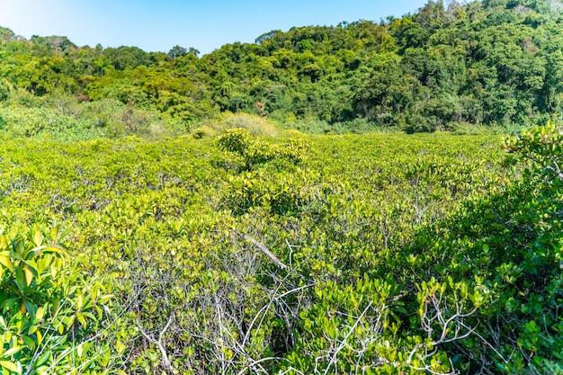 Drzewa namorzynowe wzdłuż turkusowo-zielonej słonej wody
