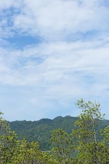 Drzewa namorzynowe z niebieskim niebem i górą w tle, naturalny i relaksujący motyw.