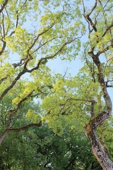 Drzewa o cienkich gałęziach i zielonych liściach