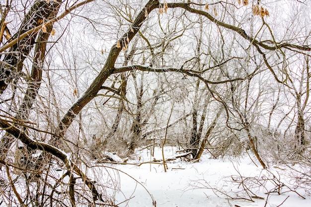 Drzewa o grubych gałęziach pokryte szronem