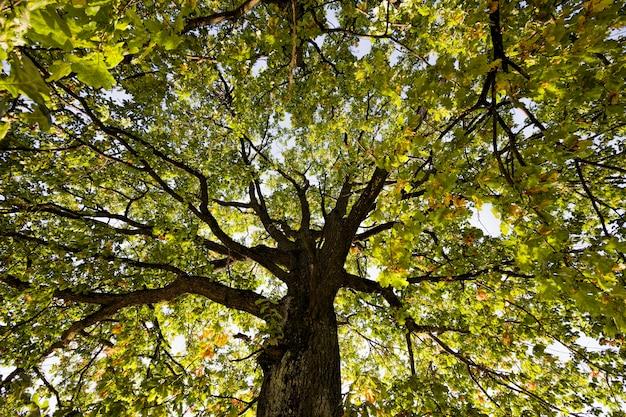 Drzewa o kolorowych liściach jesienią, słoneczna pogoda na początku lub w środku jesieni