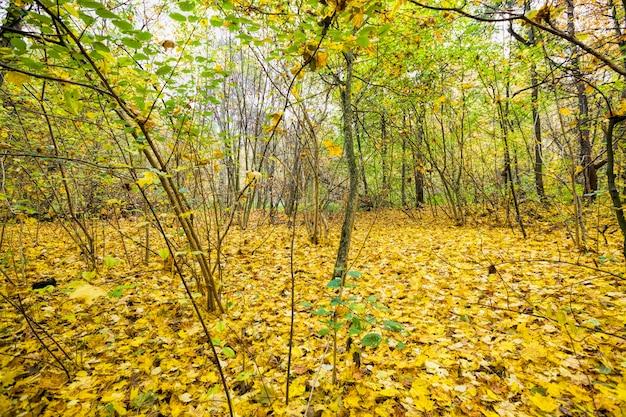 Drzewa o żółtych liściach