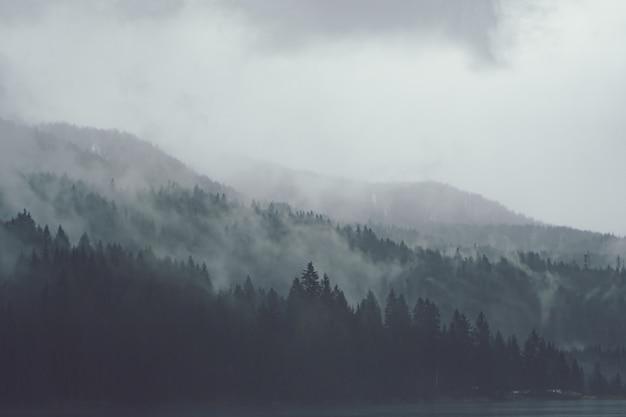 Drzewa obok siebie w lesie pokrytym pełzającą mgłą