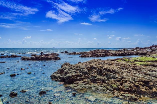 Drzewa plaża woda linia brzegowa morze