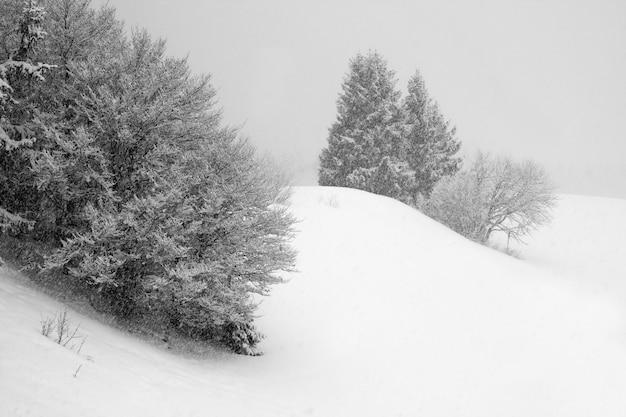 Drzewa pod burzą śnieżną