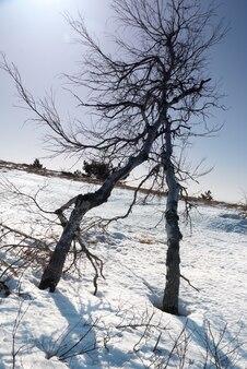 Drzewa pod śniegiem w słońcu.