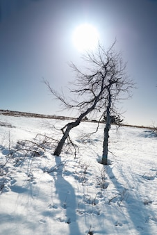 Drzewa pod śniegiem z gwiazdą słońca.