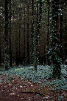 Drzewa pokryte liśćmi w przerażającym i nawiedzającym lesie