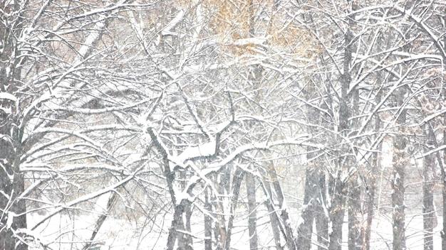Drzewa pokryte śniegiem z bliska.