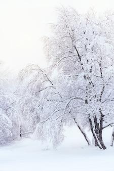 Drzewa pokryte szronem i śniegiem w zimowym lesie