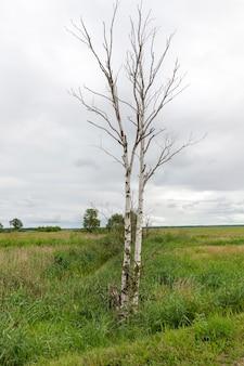 Drzewa pokryte zielenią wiosną lub latem, przyjemna piękna przyroda i świeże powietrze, drzewa rosną w pobliżu pola z zieloną trawą