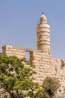 Drzewa przed wieżą dawida i murami starego miasta w jerozolimie, izrael