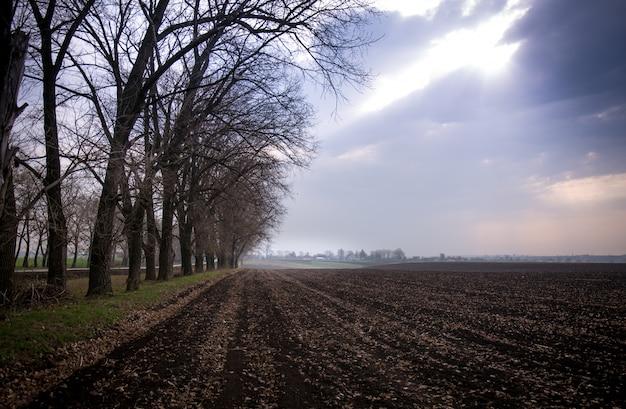 Drzewa przy polu