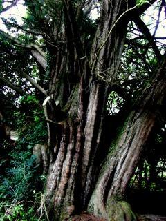 Drzewa, rośliny, starożytny