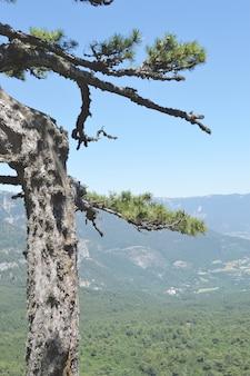 Drzewa rosną na zboczu wysokiej góry, nagie skały, widok z podnóża góry.