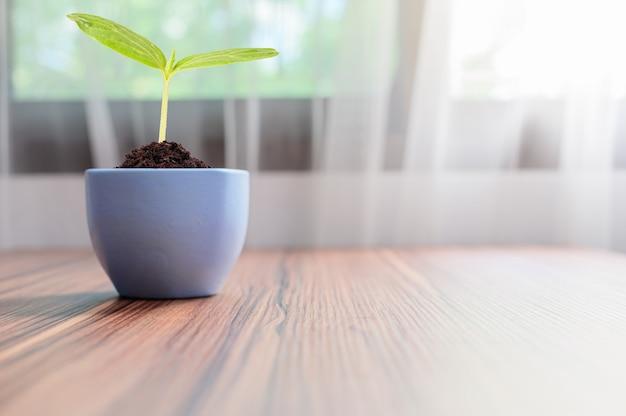 Drzewa rosną w doniczkach. kochaj rośliny.
