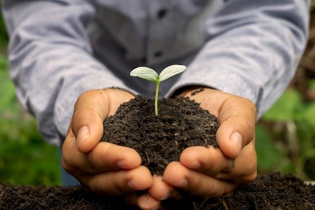Drzewa rosną w glebie na ludzkich rękach, koncepcja dnia ziemi i kampania globalnego ocieplenia.