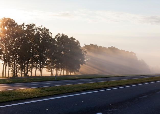 Drzewa rosnące na skraju asfaltowej drogi porośnięte liśćmi, przez które o świcie przebijają się promienie słońca, piękna sceneria
