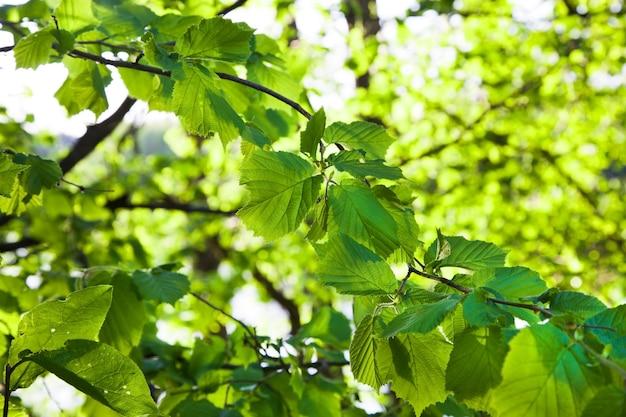 Drzewa rosnące w lesie. lato w roku
