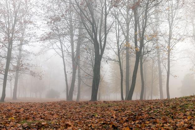 Drzewa rosnące w parku jesienią w niewielkiej mgle. liście klonu opadłego na ziemię i ciemne pnie roślin.