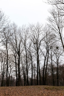 Drzewa rosnące w parku jesienią.