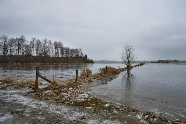 Drzewa rosnące w pobliżu jeziora i odbite w wodzie