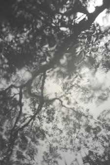 Drzewa rzucają rozmyte cienie na gładką pomarszczonej wodzie. rozmazane tło.