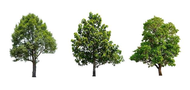 Drzewa tropikalne i subtropikalne na białym tle