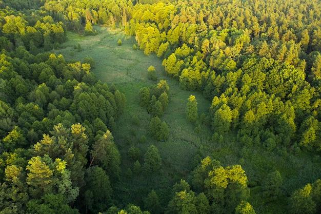 Drzewa, Trzciny I Rzeka, Tereny Podmokłe W Pobliżu Lasu, Widok Z Góry. Cudowny Letni Krajobraz, Widok Z Drona. Streszczenie Tło Naturalne. Premium Zdjęcia