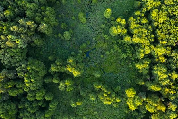 Drzewa, trzciny i rzeka, tereny podmokłe w pobliżu lasu, widok z góry. cudowny letni krajobraz, widok z drona. streszczenie tło naturalne.