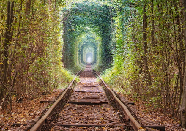 Drzewa tunel wczesną jesienią