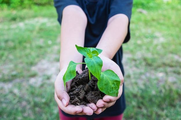 Drzewa w dłoni, pomysł sadzenia drzew i kochającej przyrody